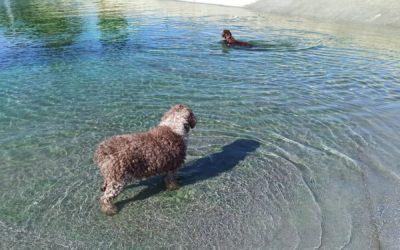 Mi Perro Mambo Va Al Parque